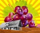 ecospesa-uva